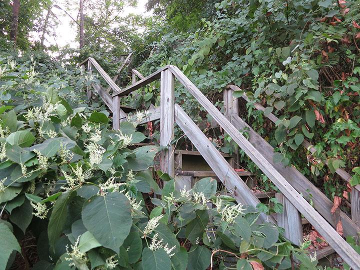 Mackey_St_Stairs1
